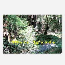 A Walk In Muir Woods Postcards (Package of 8)