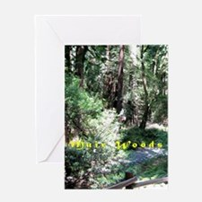 A Walk In Muir Woods Greeting Cards