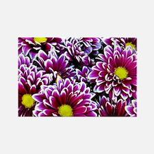 Purple, Pink, Dahlias Magnets