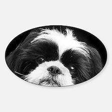 Shih Tzu Dog Bumper Stickers