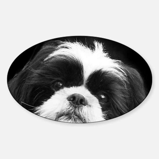 Shih Tzu Dog Bumper Stickers