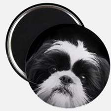 Shih Tzu Dog Magnets