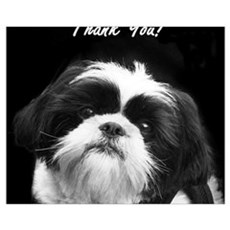 Thank You Shih Tzu Framed Print