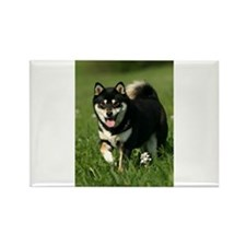 Cute Shiba inu Rectangle Magnet (10 pack)