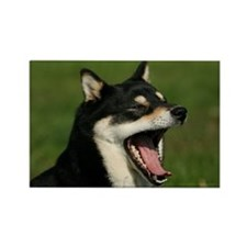 Unique Shiba inu Rectangle Magnet (10 pack)