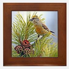 Cute Songbirds Framed Tile
