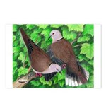 Ringneck Doves Postcards (Package of 8)