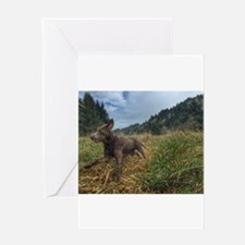 Field work Greeting Cards