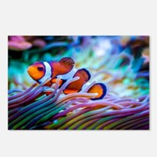 Clownfish Postcards (Package of 8)