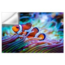 Clownfish Wall Decal