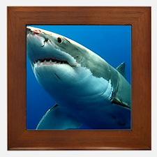 GREAT WHITE SHARK 3 Framed Tile