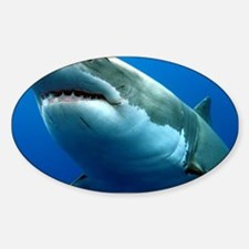 GREAT WHITE SHARK 3 Sticker (Oval)