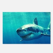 GREAT WHITE SHARK 1 Postcards (Package of 8)