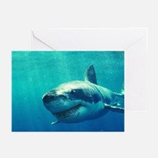 GREAT WHITE SHARK 1 Greeting Cards (Pk of 10)