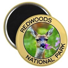 Redwoods NP (Deer) Magnet