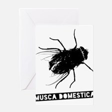 Musca Domestica - the housefly Greeting Cards