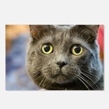 Funny Russian blue Postcards (Package of 8)