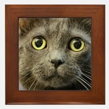Unique Russian blue cat Framed Tile