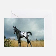 Appaloosa Colt Horse Card Greeting Cards