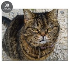 All cats are grumpy Puzzle