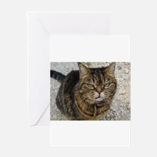 All cats are grumpy cats Greeting Cards