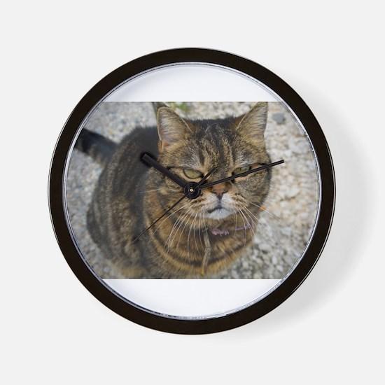 All cats are grumpy cats Wall Clock
