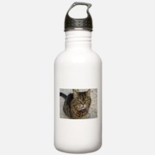 All cats are grumpy cats Sports Water Bottle