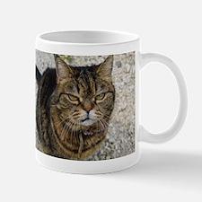 All cats are grumpy cats Mugs