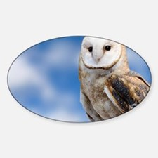 Barn Owl Sticker (Oval)