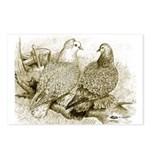 Frillback Pigeons Postcards (Package of 8)