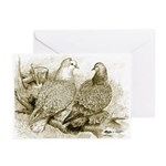 Frillback Pigeons Greeting Cards (Pk of 10)