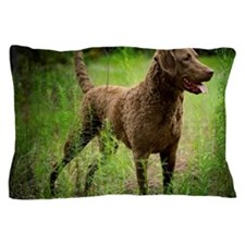 Cute Chesapeake bay retriever Pillow Case