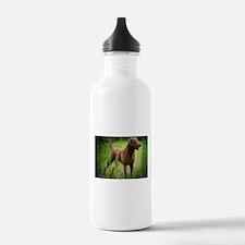 Funny Bay Water Bottle