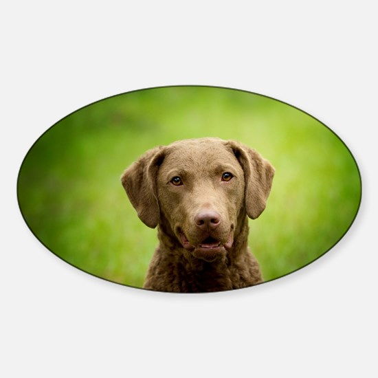 Funny Chesapeake bay retriever Sticker (Oval)