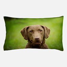 Cute Retriever chesapeake bay Pillow Case