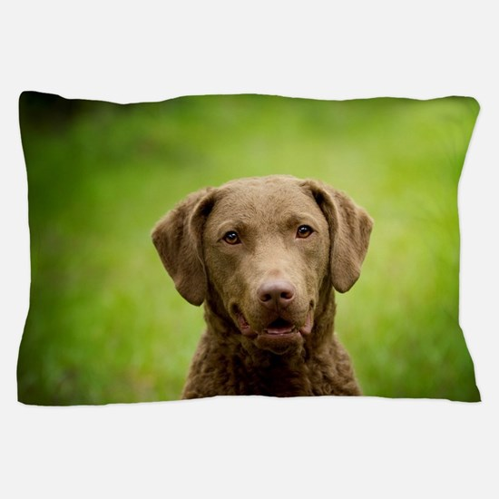Funny Chesapeake bay retriever Pillow Case