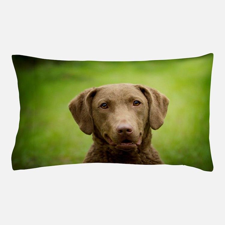 Cute Chesapeake retriever Pillow Case
