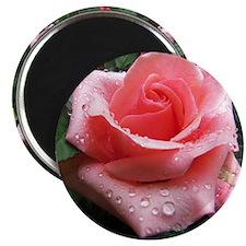 """Rose 2.25"""" Magnet (10 pack)"""