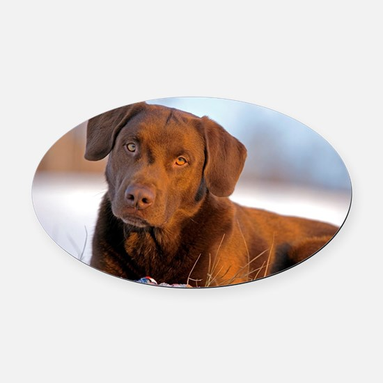 Unique Labrador playing Oval Car Magnet