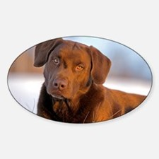 Unique Labrador playing Sticker (Oval)