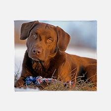 Cute Labrador retriever portrait Throw Blanket