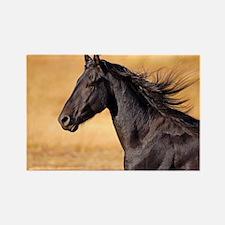 Funny Running horses Rectangle Magnet