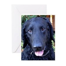 Cute Curly coated retrievers Greeting Cards (Pk of 10)