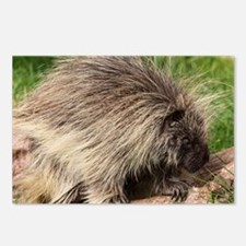 Porcupine Postcards (Package of 8)