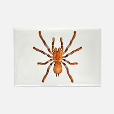 Goliath Tarantula Rectangle Magnet