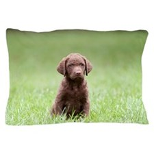 Chesapeake Bay Retriever Puppy Pillow Case