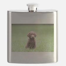 Chesapeake Bay Retriever Puppy Flask