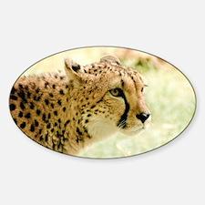 Cheetah Decal