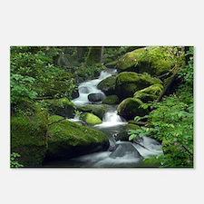 Summer Forest Brook Postcards (Package of 8)