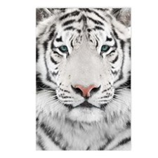 White Tiger Head Postcards (Package of 8)